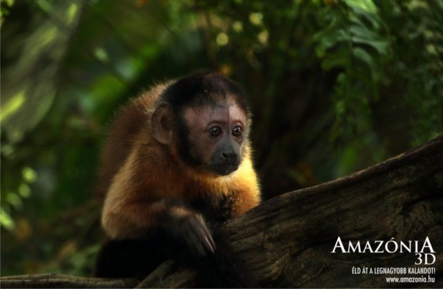 AMAZÓNIA 3D (Amazonia) 2013