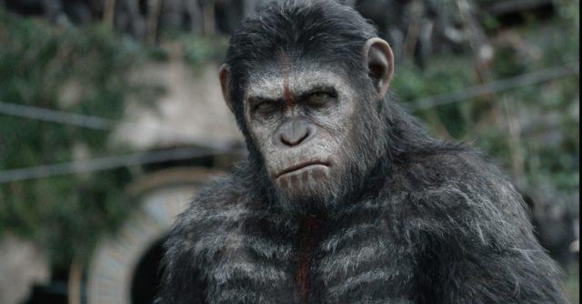 A majmok emberei