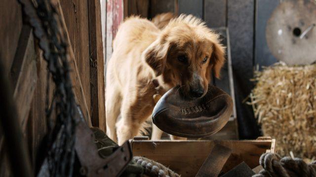 Egy kutya négy élete (A Dog's Purpose) 2017