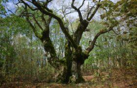 Erdők ideje