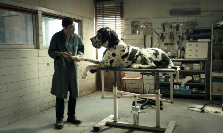Dogman - Kutyák királya