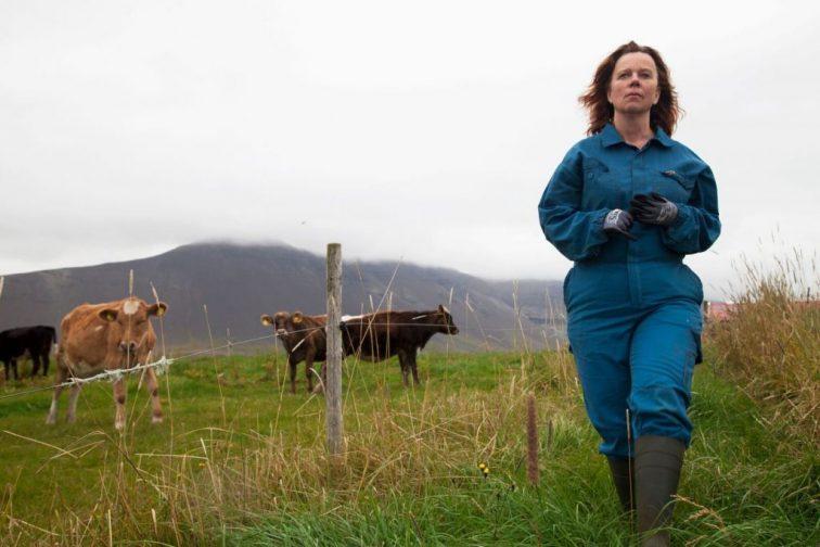 Tejháború (The County / Héraðið) 2019